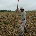 11 mil has, siniestradas por sequía