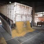 Brasil prevé una cosecha récord de 148 millones de toneladas de granos