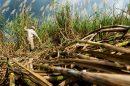 CONADESUCA, un año endulzando al campo mexicano
