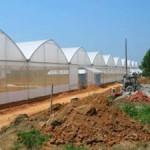 Invernaderos revolucionan economía rural en oeste de China