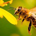 Las abejas y el medio ambiente