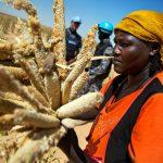 Abundan cosechas y hambre en el mundo