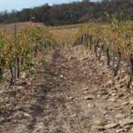 Activarán acciones preventivas por sequía en San Luis Potosí