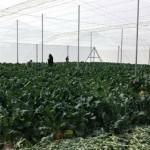 Actualizan censo de invernaderos en San Luis Potosí