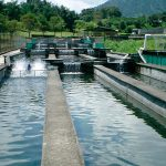 Desarrollo de la acuacultura