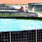 La acuacultura en México