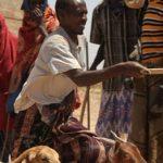 Cuerno de África se prepara para carestía