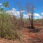 Agricultura sostenible para la salud de los bosques