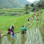 Nueva agricultura en Nepal
