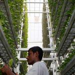 Agricultura gana terreno en las ciudades