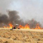 La agricultura siria debe reactivarse