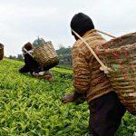 Agro saca la cara por la economía colombiana