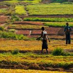 Imágenes satelitales miden productividad del agua en agricultura