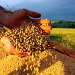 UE analiza impacto económico de OGM