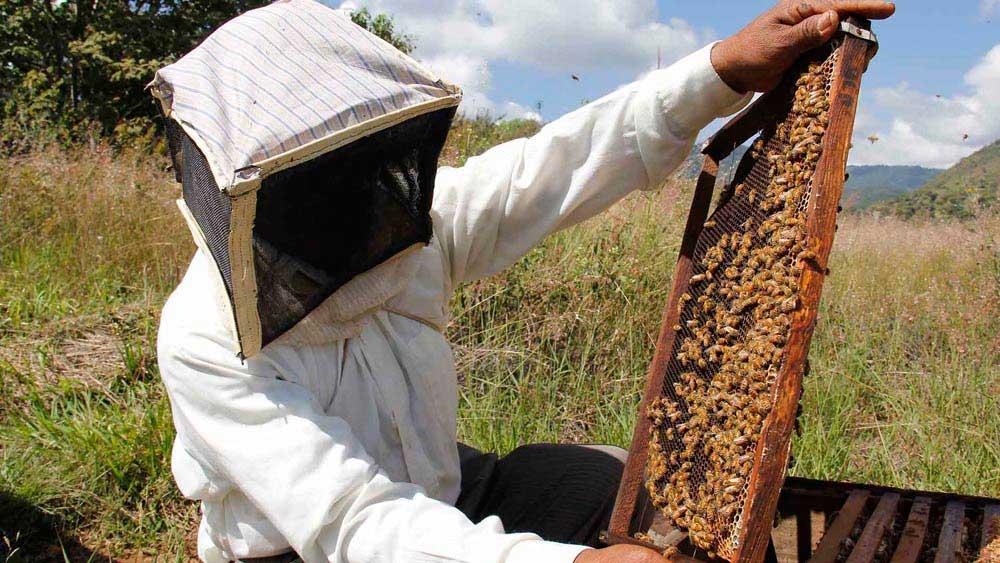 Pasos de la apicultura.