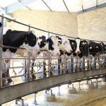 Apoyan a productores de leche