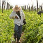 Apoyos históricos de banca de desarrollo a pequeños productores