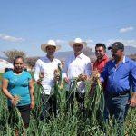 Entregan apoyos a productores de Oaxaca