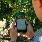 App recomienda el fitosanitario ideal