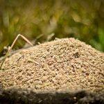 Nuevo arroz requiere menos fertilizante