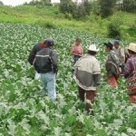Aumenta 11 por ciento financiamiento a pequeños productores