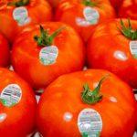 Aumenta producción de jitomate mexicano