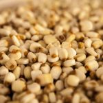Bacteria estimula desarrollo de maíz y sorgo