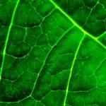 El azufre es más eficaz al aplicarlo en abonos complejos