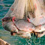 Biodiversidad del sector pesquero
