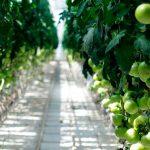 Cosecha segura con agricultura protegida