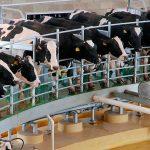 Productores de leche buscan colocar producto