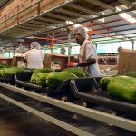 Buscan vincular a productores en cadenas de valor y comercialización