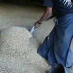 Caída en precio del maíz provoca pérdidas por 23 mil mdp
