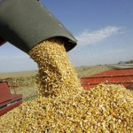 Caída de precios en granos afecta metas de FIRA