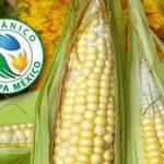Taller de capacitación para certificación de productos orgánicos