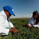 Mejores cereales y leguminosas para África Subsahariana