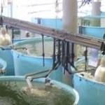 Certifican sanidad e inocuidad de productos pesqueros