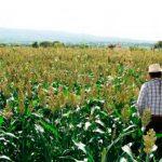 Prevén ciclo agrícola favorable en Querétaro