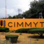 Cimmyt proveerá a Nestlé-Purina el 100 % de sus granos