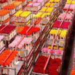 Colombia, un modelo de experiencia en la industria florícola