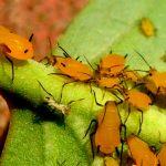 Control de plagas reduce desperdicio de alimentos
