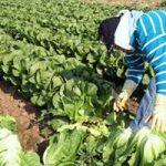 Crece 5.7% PIB de actividades primarias: Sagarpa