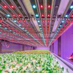 Agricultura con iluminación led
