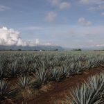 Cultivos resistentes a sequía