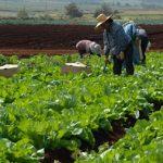 Desarrollan en INIFAP tecnología para cálculo de fertilización