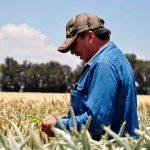 Sector agroalimentario enfrenta desafíos internacionales