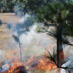 Descartan afectaciones a arbolado por incendios