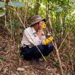 Nuevas directrices de la FAO para evaluar sus recursos forestales