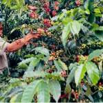 Dos empresas admiten riesgo de trabajo esclavo en cadena de suministro