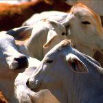 Estados Unidos exportará carne bovina a China